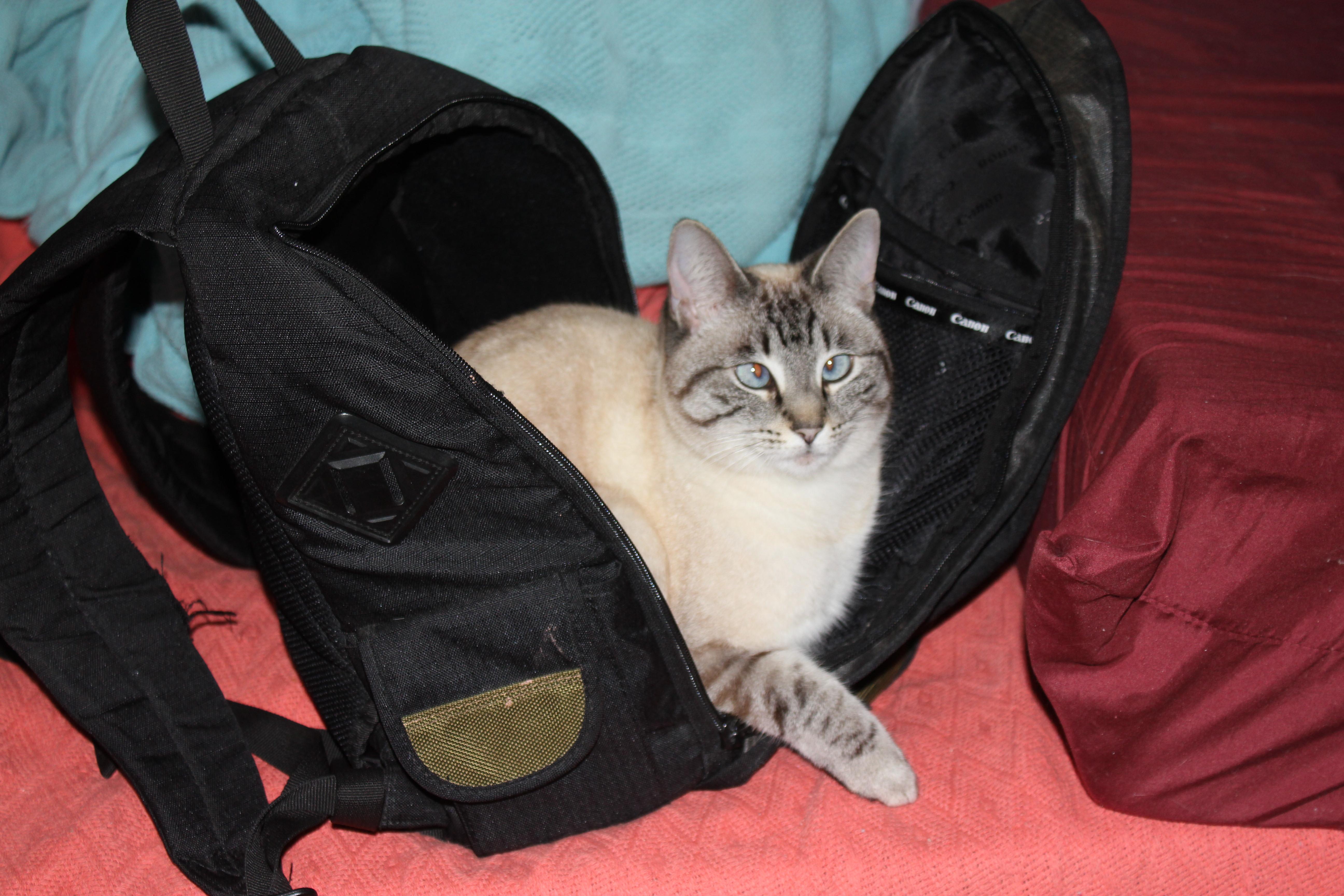 Still packing...