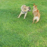 Marzipan and Watson