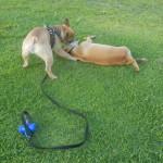 Watson and Marzipan play