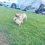 Watson and Marzipan