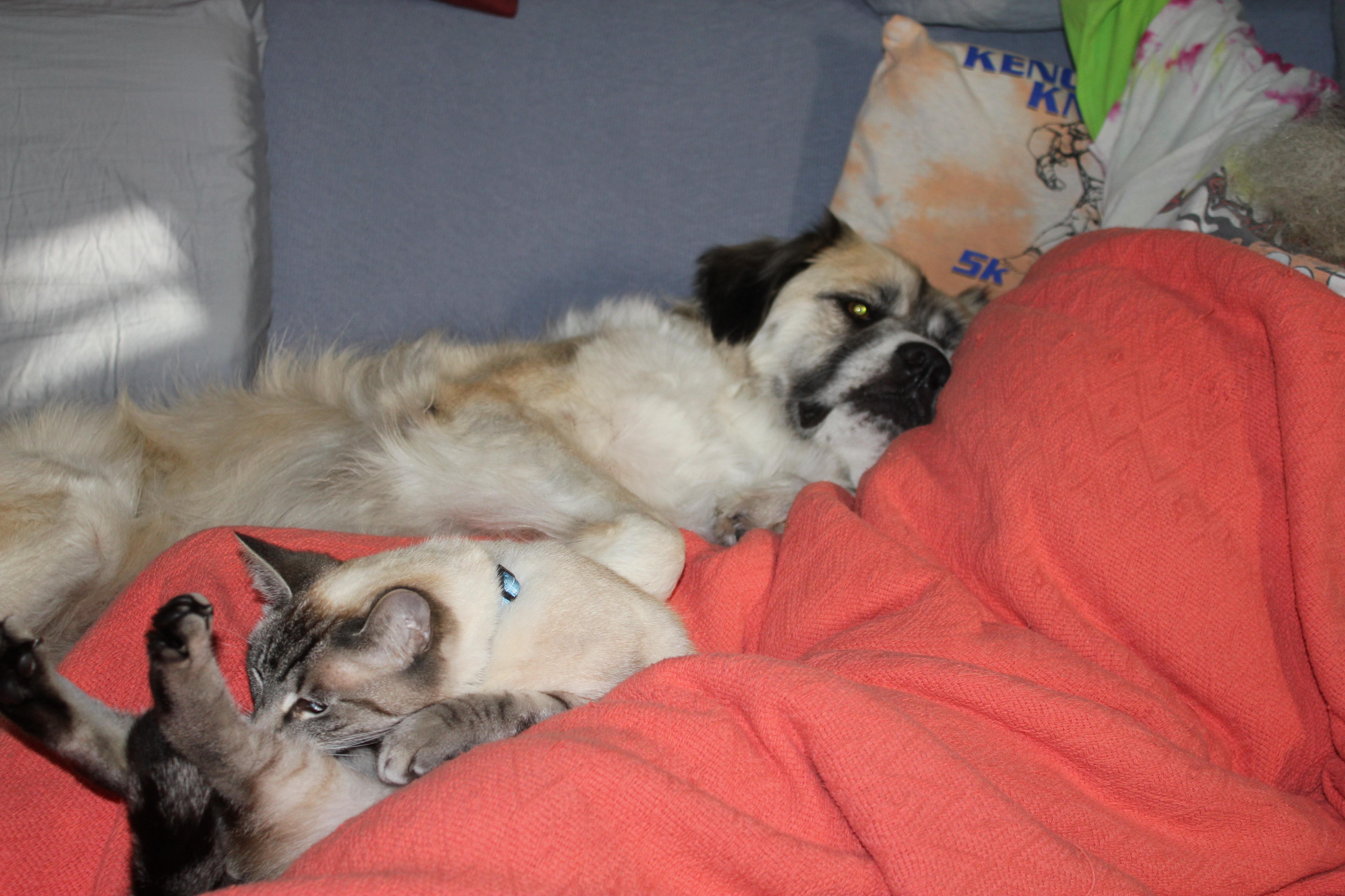 Herman and Aqua relaxing