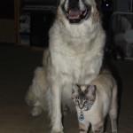 Herman and Aqua