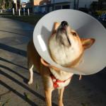 the cone head shake