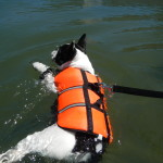 Bruce swimming