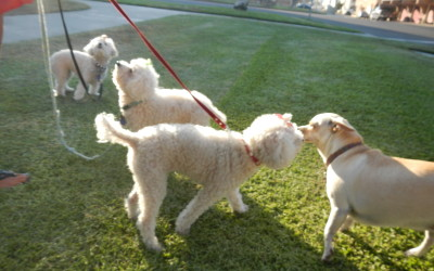 Buttercup, Snowball, Cookie, and Rosie
