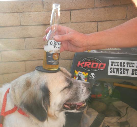 Stabilze beer