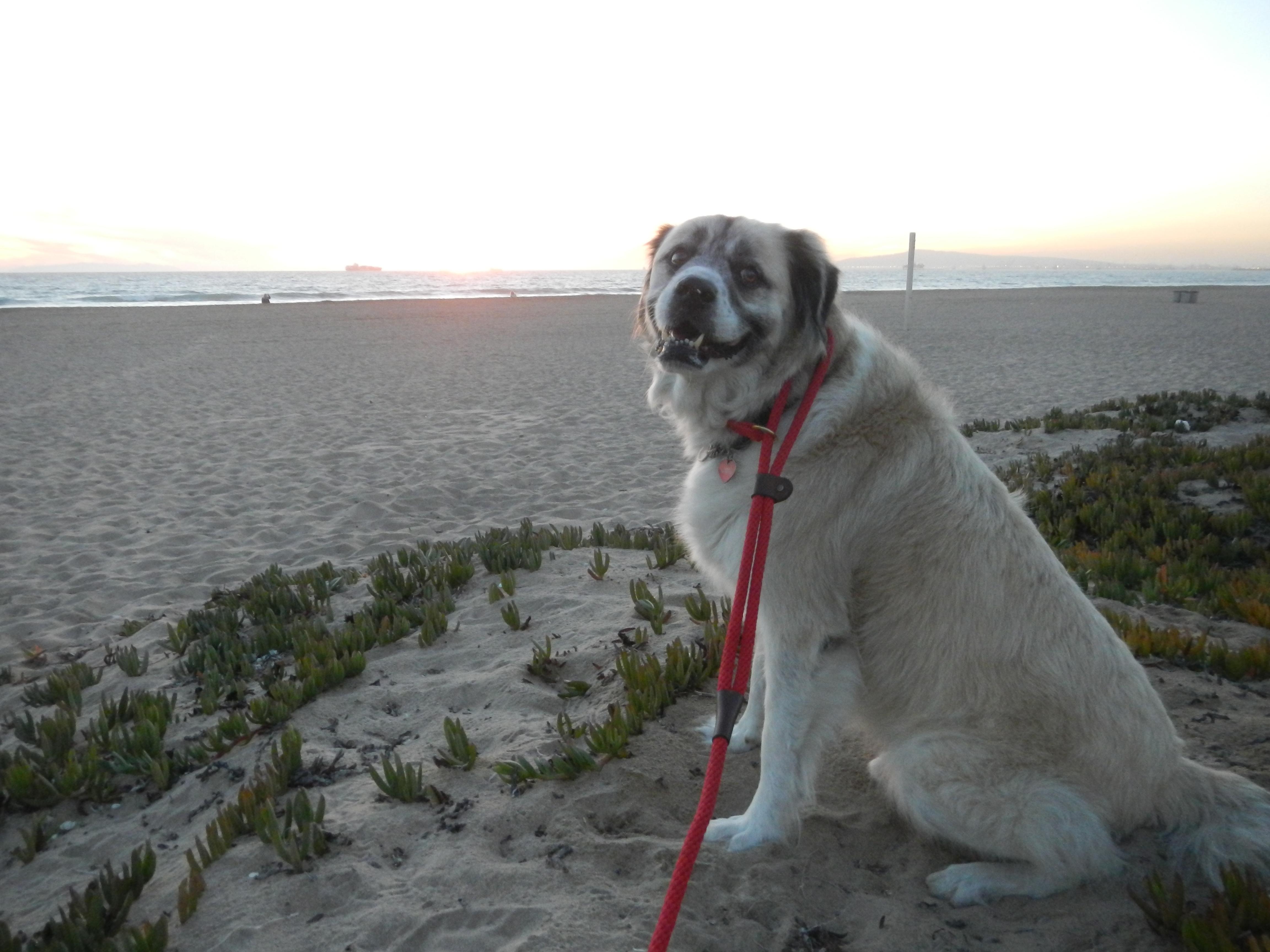 Herman: Hey, look the sun is setting!
