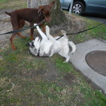 Quasar and Lila play