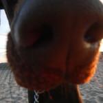Quasar's nose