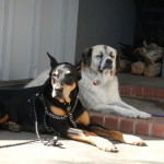 Connor (R.I.P.) enjoying the sun with his buddy, Pscyho Herman