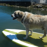Herman steals a paddle-board and tries to escape in the harbor