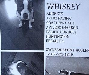 Whiskey Lost, then found