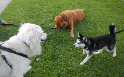 Finn, Charlie, and Rikki