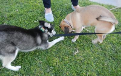 Rikki and Kiwi
