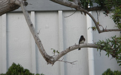 A bird in the tree is worth ... how did that saying go again?