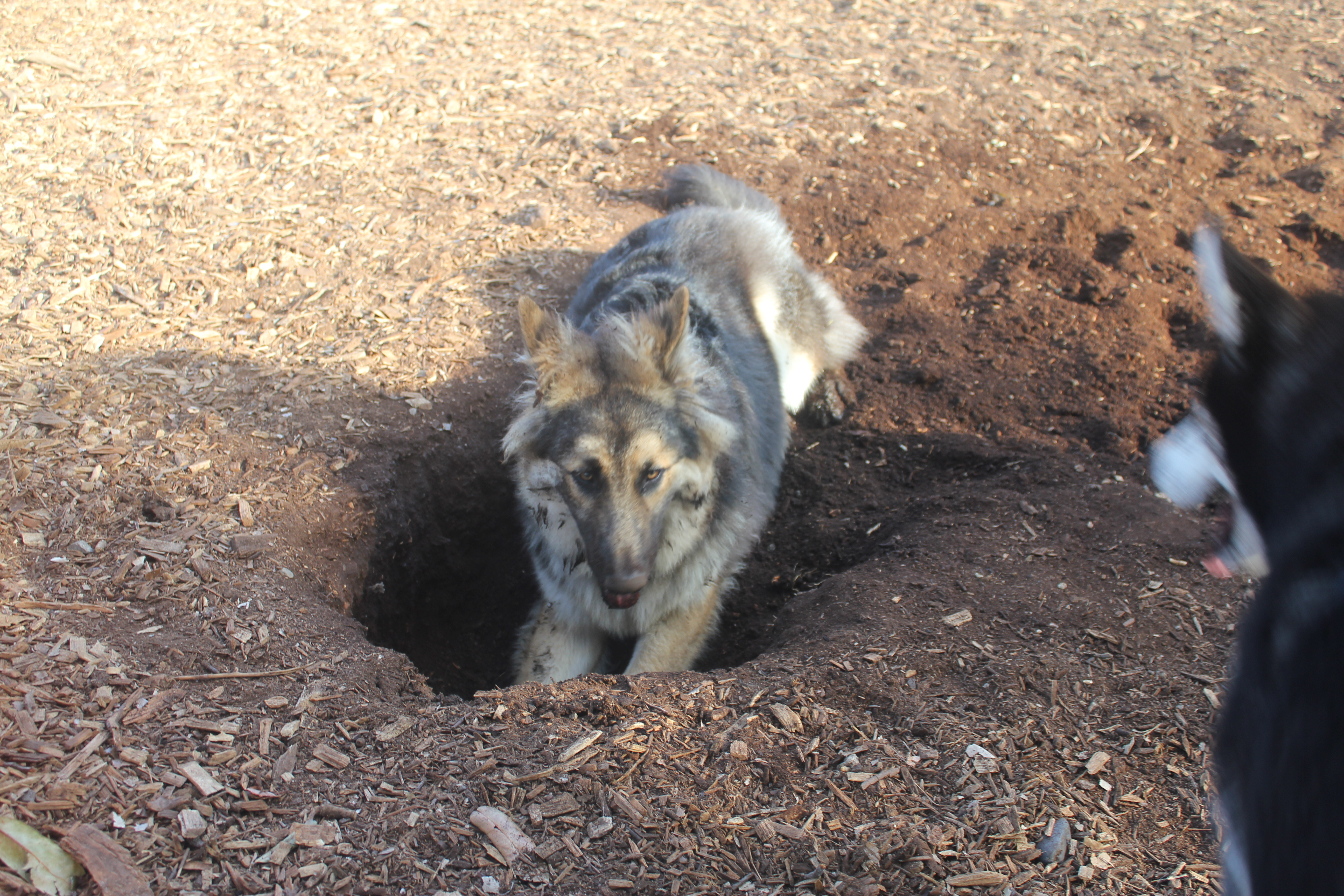 It's my hole - at least when Bandit isn't looking.