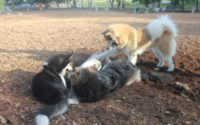 Bandit, Max, Penny, and Misty