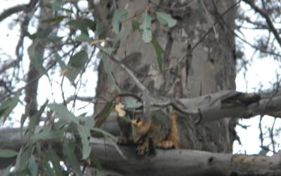 Finally, I found a squirrel!