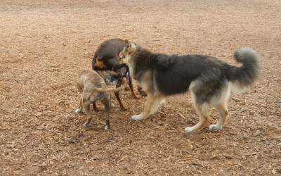 And now some dogs at dog park