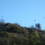 Bats? Only crows...