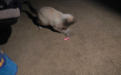 Aqua chasing a laser beam