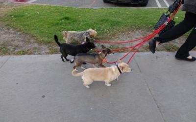 Penny, Kona, Macey, and Mino