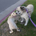 Sammy and Herman: remember a month or two ago when I was small enough to swing on your tail…