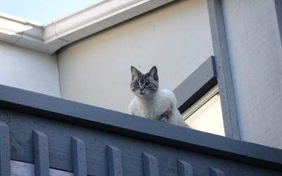 Yup, there she is, Aqua the cat, always watching over us!