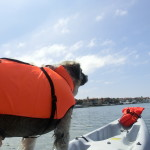 2012 June 20 Herman enjoys Kayaking in the wilderness of Huntington Harbor