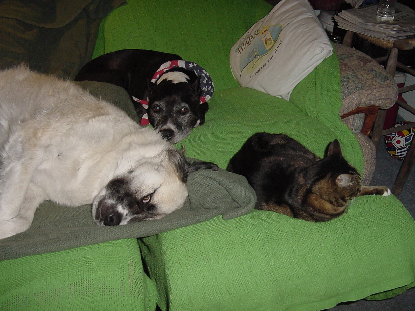 2005 June 06 Thor, Herman, and Stripes rlaxing