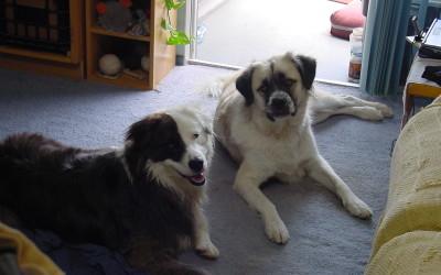 2006 June 12 Herman and his best friend, Brody