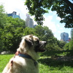 2010 June 08 Herman at Central Park, in New York City NY