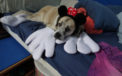Psycho Minnie Herman Mouse