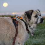 Herman 2 weeks ago with super moon in background