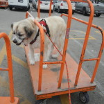 Ready to go shopping at Home Depot