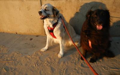 Herman with Evee, the girl next door