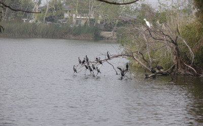 Various birds on a branch over a lake